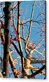 Fall Is On It's Way Acrylic Print by Ronald Talley