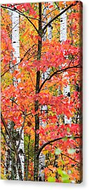 Fall Layers II Acrylic Print by Adam Pender