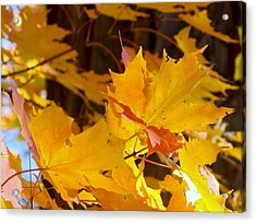 Fall Leaves Acrylic Print by Angelika MacDonald