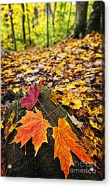 Fall Leaves In Forest Acrylic Print