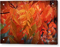 Fall Leaves In Gold Acrylic Print
