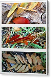 Fall Leaves  Acrylic Print by K Marie