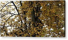 Fall Leaves Panorama Acrylic Print by Mary Gaines