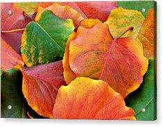 Fall Leaves Acrylic Print by Sheila Kay McIntyre