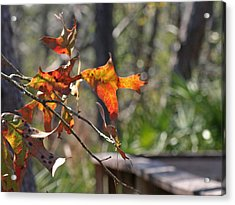 Acrylic Print featuring the photograph Fall by Lou Belcher