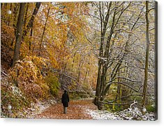 Fall Meets Winter - Walking In The Forest Acrylic Print by Matthias Hauser