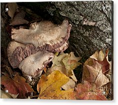 Fall Mushrooms Acrylic Print by Wilma  Birdwell