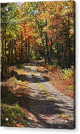 Fall On The Wyrick Trail Acrylic Print by Denise Romano