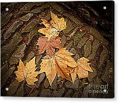 Fall Pattern Acrylic Print