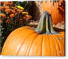 Fall Pumpkin Acrylic Print by Kimberly Perry