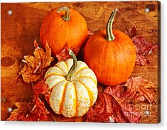 Fall Pumpkins And Decorative Squash Acrylic Print