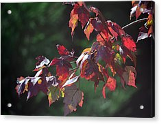 Fall Red Acrylic Print by Sandi OReilly