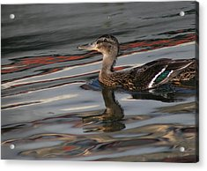 Fall Reflections And Duck Acrylic Print by Valia Bradshaw