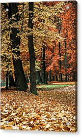 Fall Scenery Acrylic Print by Hannes Cmarits