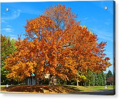 Fall Splender Acrylic Print by George Hawkins