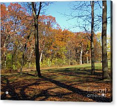 Fall Tree Shadows Acrylic Print by Cedric Hampton