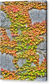 Acrylic Print featuring the photograph Fall Wall by Michael Frank Jr