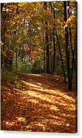 Fall Woods Acrylic Print by Kevin Schrader
