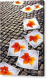Fallen Autumn  Prints Acrylic Print by Carlos Caetano