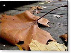 Fallen Leaf Acrylic Print by Jack Schultz