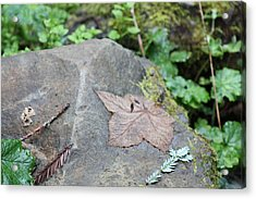 Acrylic Print featuring the photograph Fallen Nb by Susan Alvaro