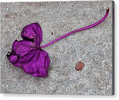 Fallen Purple Leaf Acrylic Print by Robert Ullmann