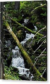 Fallen Tree Falls Acrylic Print
