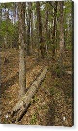 Fallen Tree In Forest Acrylic Print by M K  Miller