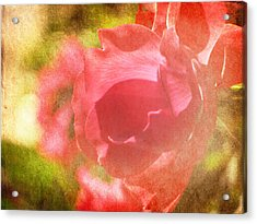 Falling In Love Acrylic Print by Amy Tyler