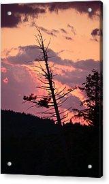 Falling Into The Sunset Acrylic Print by Mandi Howard
