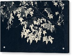 Falling Stars Acrylic Print by Laurie Search