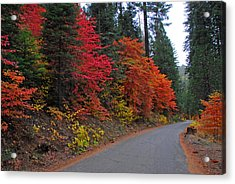 Acrylic Print featuring the photograph Fall's Splendor by Lynn Bauer