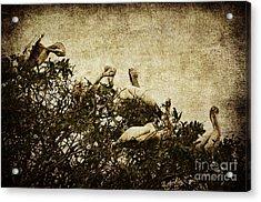 Family Tree Acrylic Print by Andrew Paranavitana