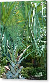 Fan Palm Acrylic Print