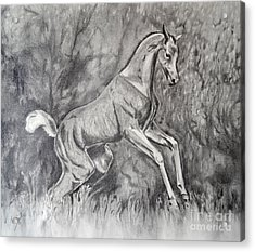 Fancifilly Acrylic Print by Suzette Kallen