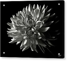 Fancy Dahlia In Black And White Acrylic Print