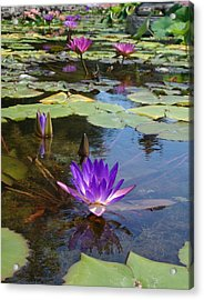 Acrylic Print featuring the photograph Fantasy by Elizabeth Sullivan