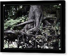 Fantasy Roots Acrylic Print by Linda Olsen