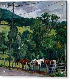 Farm Horses Berkshires Acrylic Print