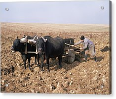 Farmer Fertilising A Field Acrylic Print by Bjorn Svensson