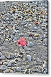 Fashion Satement Acrylic Print by Greg and Chrystal Mimbs