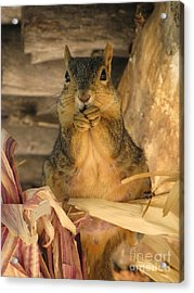 Acrylic Print featuring the photograph Fat N Sassy by Michelle H