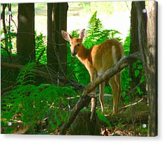 Fawn In The Woods Acrylic Print by Artistic Photos