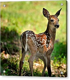 Fawn Toddler Acrylic Print by Nava Thompson