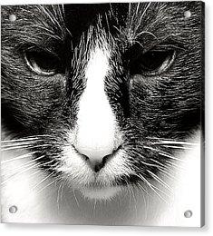 Fearless Feline Acrylic Print