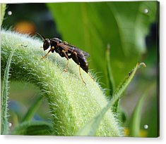 Fears Calmed By Morning Dew Acrylic Print by Katie Bauer
