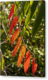Feather Like Acrylic Print by Kat Besthorn