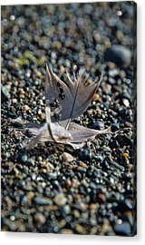 Acrylic Print featuring the photograph White Feather by Marilyn Wilson
