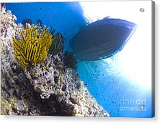 Feather Stars With A Boat Acrylic Print by Steve Jones