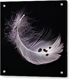 Feather With Blood Acrylic Print by Joana Kruse